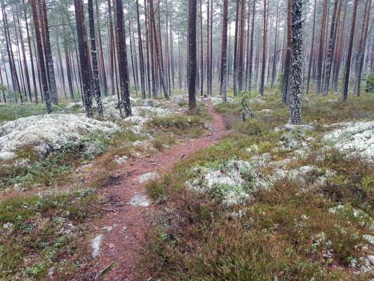 Dags att varva ner och komma närmare naturen?